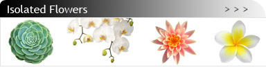 banner_flower_is